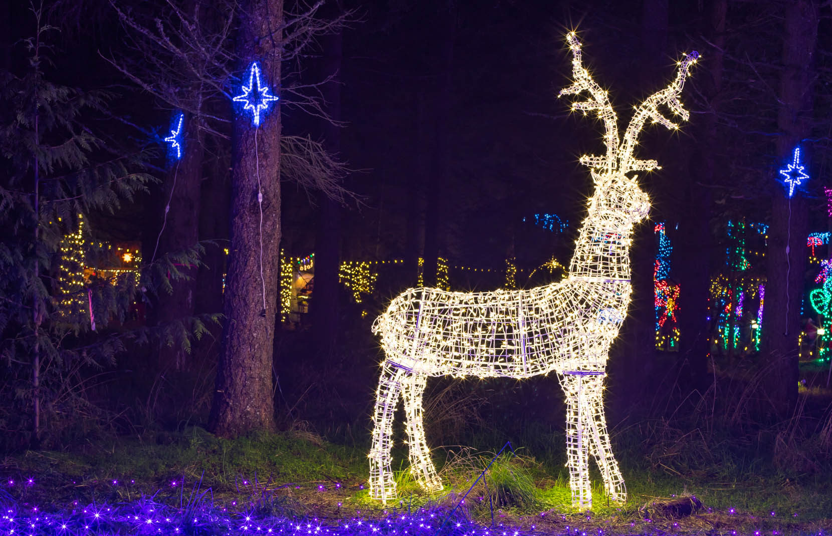 light show reindeer