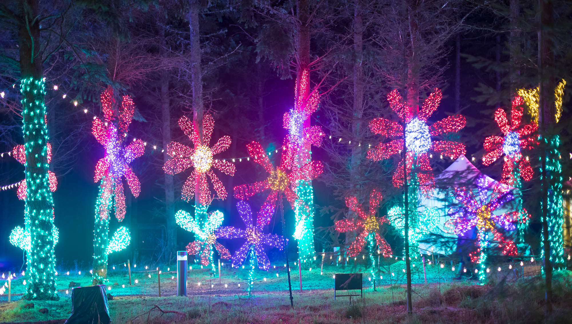 xmas light show of flowers