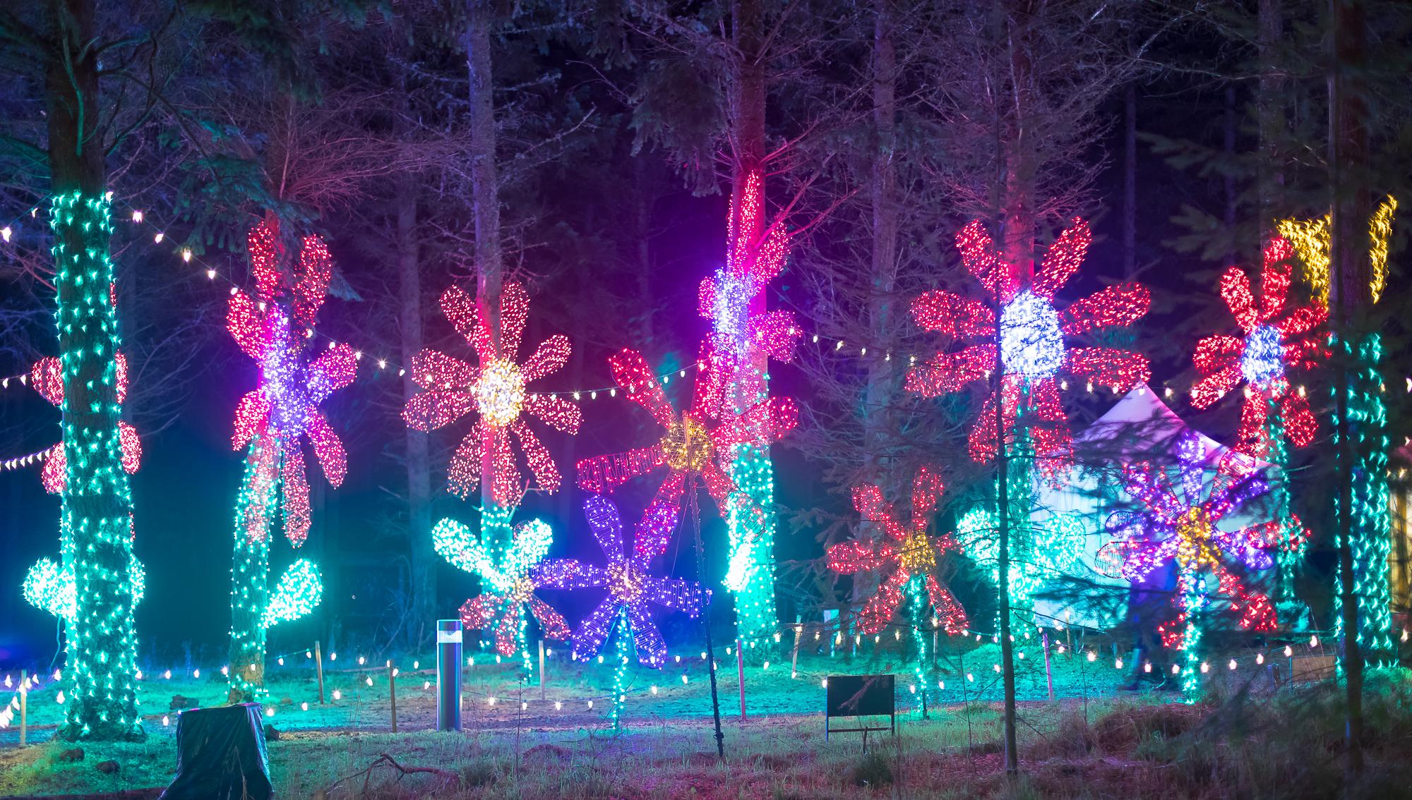 xmas light show of flowers